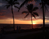 Sunsetpalm